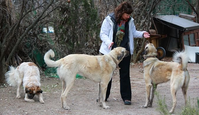 Dalene with three of the four dogs in rural Turkey doing a house sit