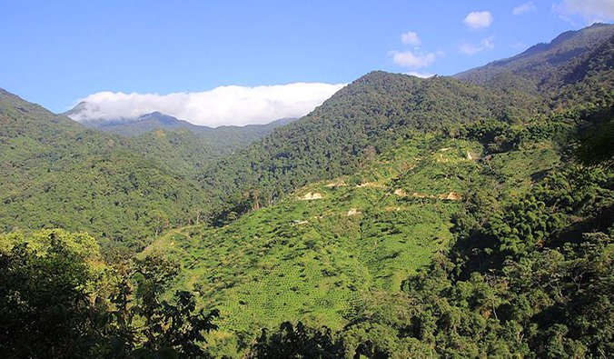 lush green mountain hills over Minca, Colombia; photo by diego_cue (Wikimedida Commons)