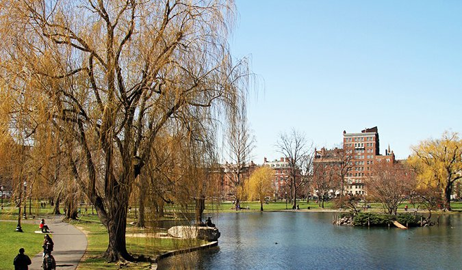 The trees and water near Boston's Public Gardens on a summer day
