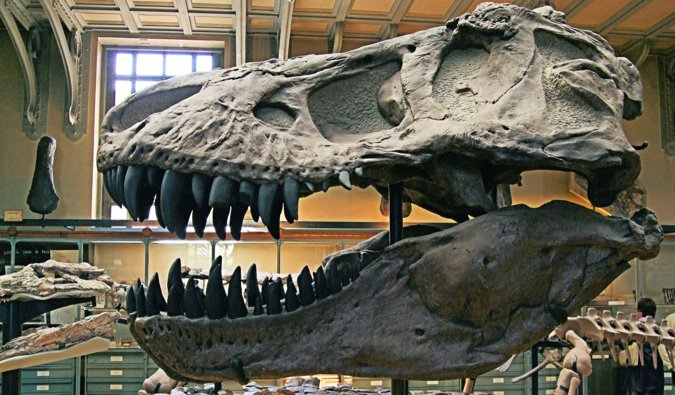 A massive skull from a T-Rex in a museum in Paris, France