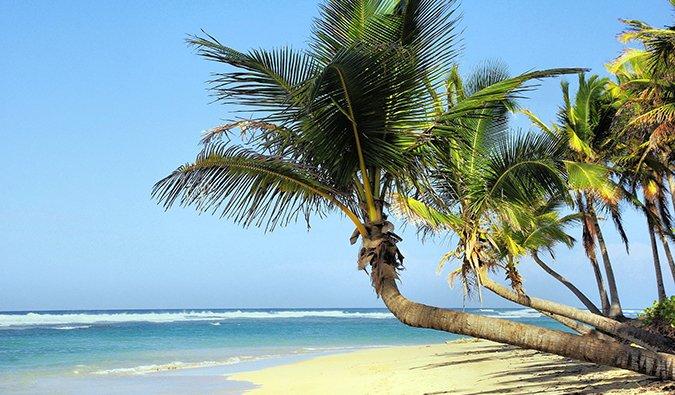 a tropical beach scene in Cuba with a palm tree