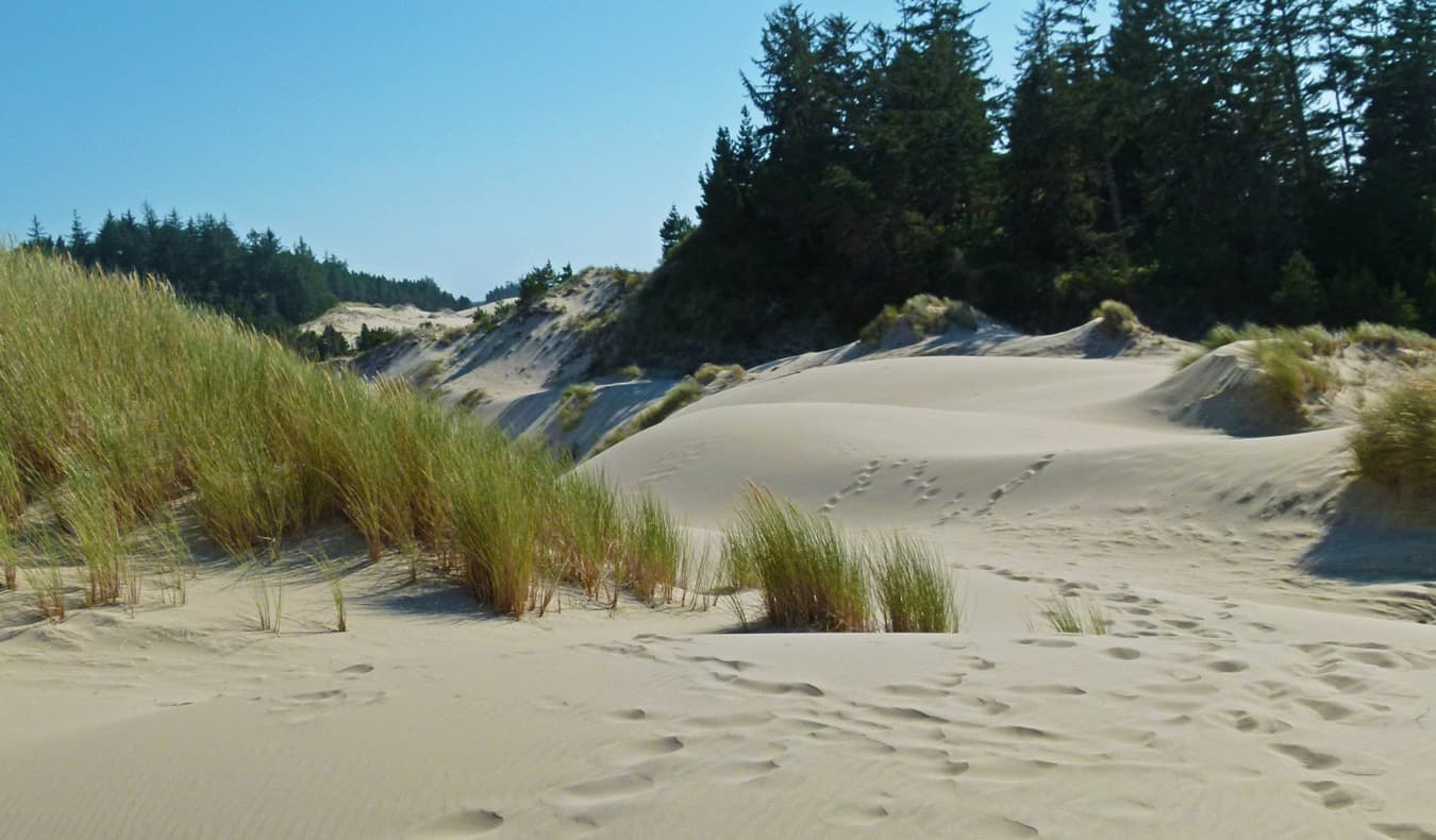 The sweeping sand dunes on the coast of Oregon, USA